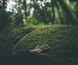 hand, forest, and green image