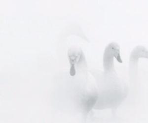 beautiful, classy, and white image