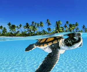 turtle, sea, and summer image
