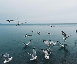 bird and sea image