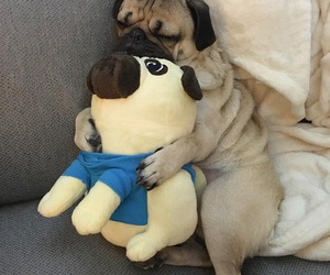 bonito, hugs, and pugs image