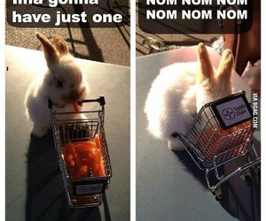 cute, carrot, and funny image