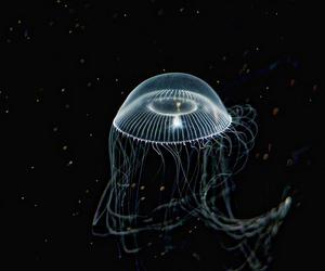 aquarium, monterey, and bay image