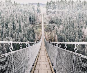 bridge and nature image