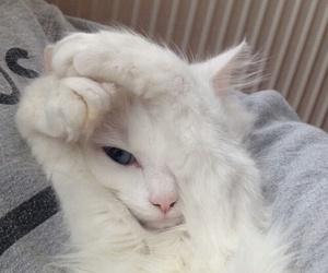 animal, cute, and aw image
