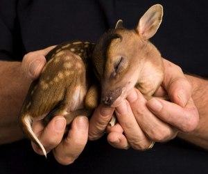 deer, very cute, and animal image