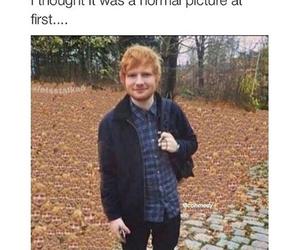 funny, ed sheeran, and lol image