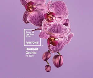 pantone, 2014, and color image