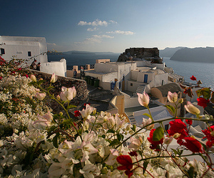 Greece, beautiful, and flowers image