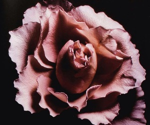 flowers, dark, and rose gold image