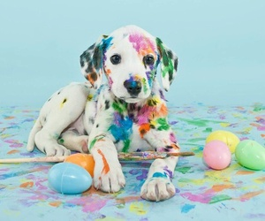 blue, colors, and dog image