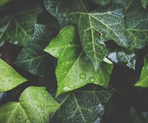 green, ivy, and nature image