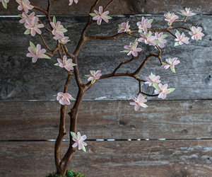blossom, branches, and cherry image