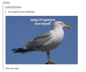 funny, goals, and seagull image