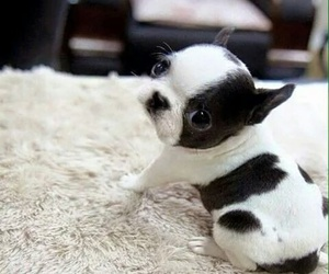 chiot image