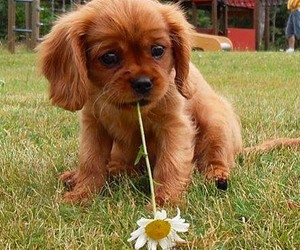 dog, daisy, and flowers image