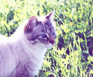 cat, grass, and blue eyes image