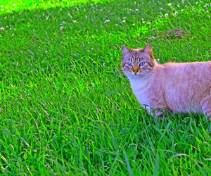 cat, grass, and green image