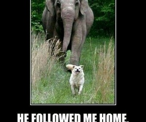 dog, elephant, and funny image