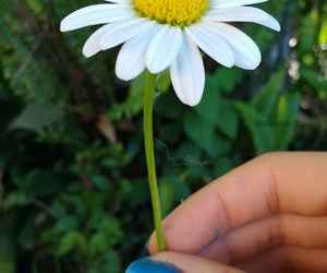argentina, cool, and flower image