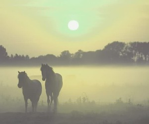 beautiful, sun, and horses image