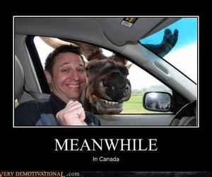 lol, canada, and funny image