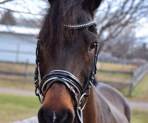 animal, caballo, and cheval image