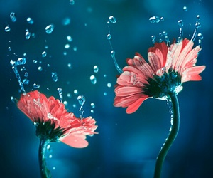 flowers, drop, and nature image