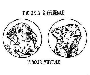 vegan, animal, and dog image