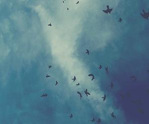 bird, sky, and blue image