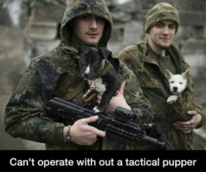 army, puppy, and soldiers image
