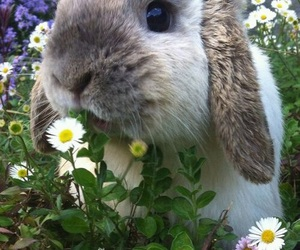 animal, rabbit, and bunny image