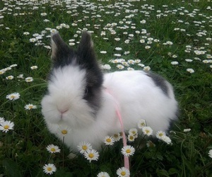 cute, bunny, and flowers image