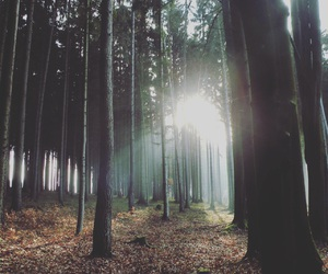 animal, czech, and forest image
