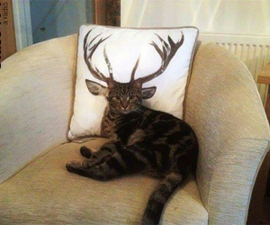 cat, funny, and game of thrones image