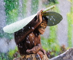 animal, monkey, and rain image