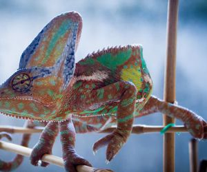 blue, lizard, and orange image