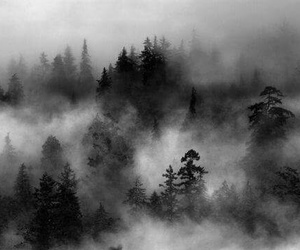 dark, Darkness, and fog image