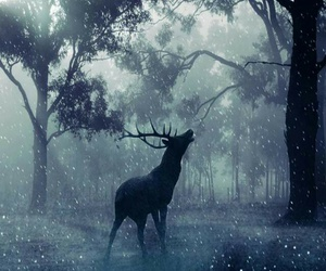 animal and forest image