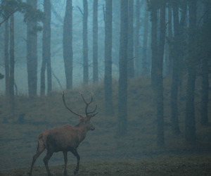 animals, forest, and dark image
