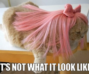 cat, pink hair, and funny cats image