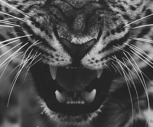 animal, b&w, and wild image