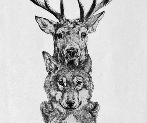 wolf, animal, and bear image