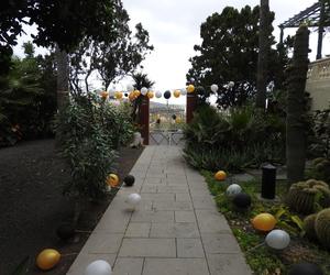 cumpleaños, gran canaria, and dia nublado image