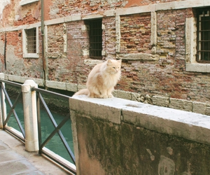 cat, travel, and wanderlust image