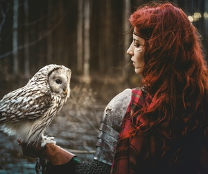 owl, nature, and forest image
