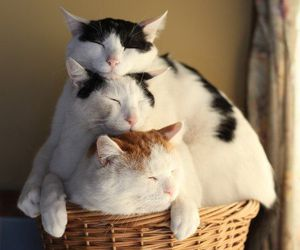 cat, cats, and cute. image