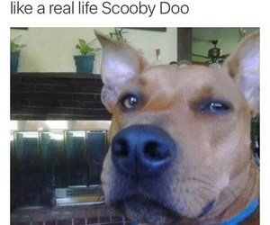 funny, scooby doo, and dog image