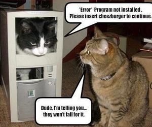cat, cats, and cheeseburger image