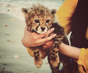 adorable, leopard, and cute image